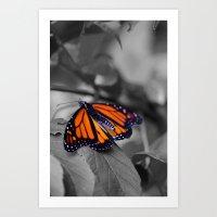 Monarch BW Art Print