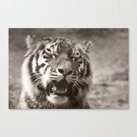 Tiger Cub 1 Canvas Print