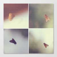 Moth Collage Canvas Print