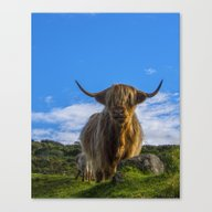 Canvas Print featuring Highland Cow by Chris Thaxter
