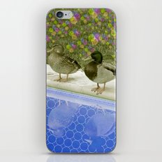 duckz iPhone & iPod Skin