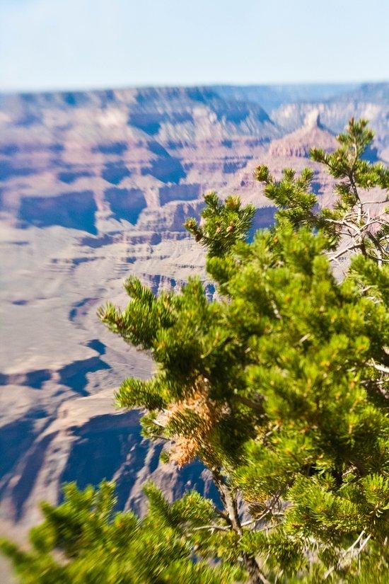 Grand Canyon 5 Art Print