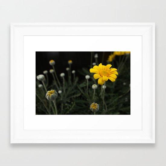 Spring - Chrysanthemum Framed Art Print