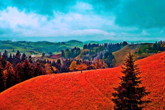 Landscape Print Canvas Print