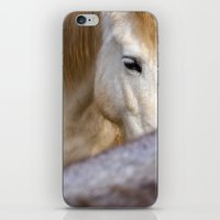 Camargue Horse portrait 6827 iPhone & iPod Skin