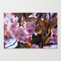 blossom love Canvas Print