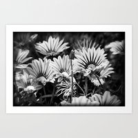 Desert Daisies (bnw) - Daisy Project in memory of Mackenzie Art Print
