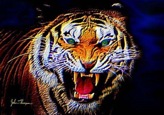Fearless Tiger 2 Art Print