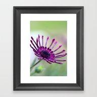 Vibrant Purple Flower Framed Art Print