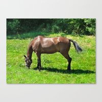 A Grazing Horse Canvas Print