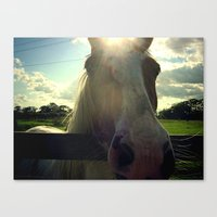 Sunny Horse Canvas Print
