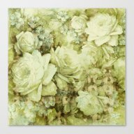 White Climbing Rose Canvas Print