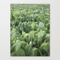 Green Textures - Food - Vegetables Canvas Print