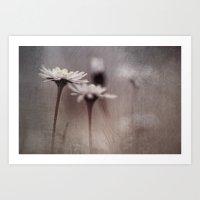 Dark Daisy... Art Print