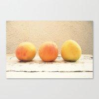 3 Apricots Canvas Print