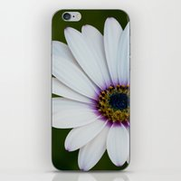 Blue Eyed Daisy iPhone & iPod Skin