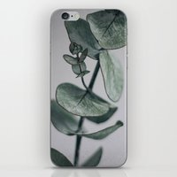 Eucalyptus iPhone & iPod Skin