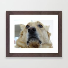 Indian Dog Framed Art Print