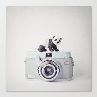 The Panda And The Ikonet… Canvas Print