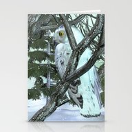 Into The Wild Snowy Owl Stationery Cards