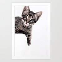 Janine, A Beautiful Cat Art Print
