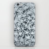 Queen Anne's Lace Flower… iPhone & iPod Skin