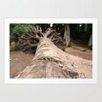The Beech Forest Art Print