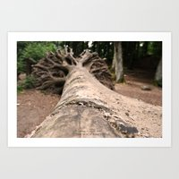 The Beech Forest Art Print