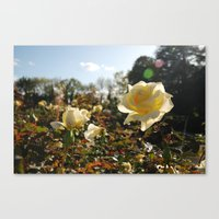 Rose Garden Sunshine Canvas Print