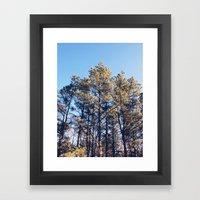 Suffolk County Park, Long Island Framed Art Print