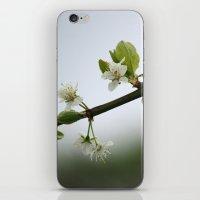 Victoria Plum Blossom iPhone & iPod Skin