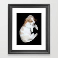 Basset Hound Puppy Framed Art Print