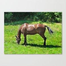 A Grazing Horse Canvas Print