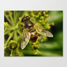 Bee? Canvas Print