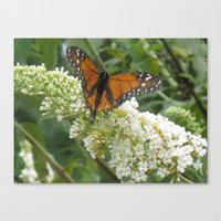 Canvas Print featuring Monarch on Butterfly Bush by Joy Reyes