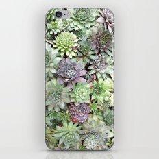 Desert Flower II iPhone & iPod Skin