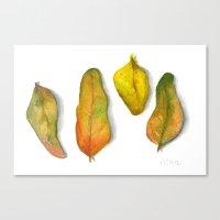 Crandall Park Specimen N… Canvas Print