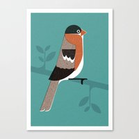 Raitán (Asturian Robin) Canvas Print