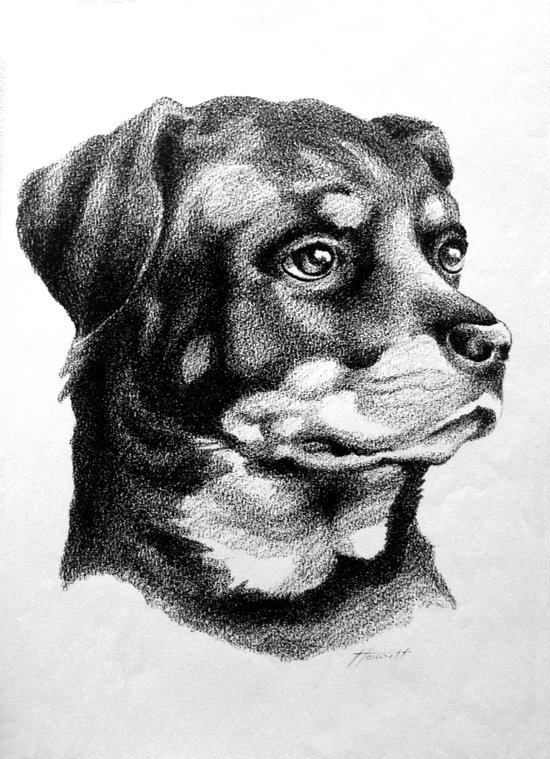 Rottweiler Devotion Art Print
