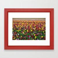 Fields of Color II, Woodburn Tulip Festival Framed Art Print