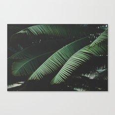 Night in the Tropics Canvas Print