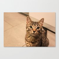 Millie (100% of proceeds donated to charity) Canvas Print