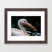 the pelican Framed Art Print