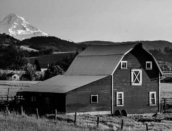 Barn in Hood River Valley, with Mount Hood Canvas Print
