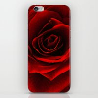 rose d'amour iPhone & iPod Skin