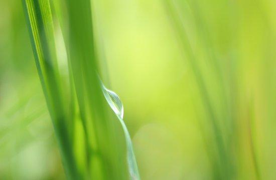 Green /Tear drop in the Green  Art Print