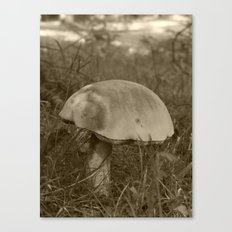 big mushroom 2016 Canvas Print
