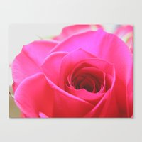 Pink Roses #2 Canvas Print