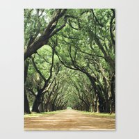 Canopy of Oaks Canvas Print