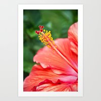 Tropical Bloom Art Print